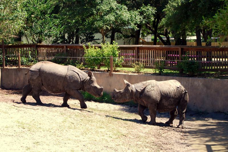 2014 Zoo in Sanford, Florida (11).JPG
