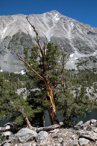 Mount Morgan and Box Lake, John Muir Wilderness, California
