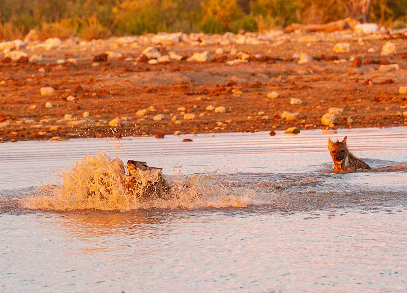 Kudu escape 4
