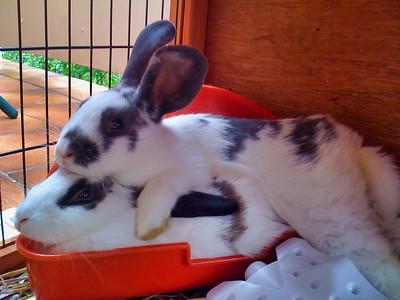 20091115 Bunnies