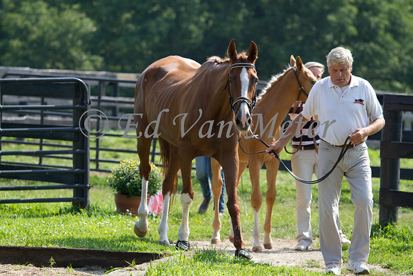 RPSI Horse Inspections 2013 Moserwood