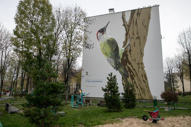 ptasie-murale-autor-wojciech-rokosz_4.jpeg