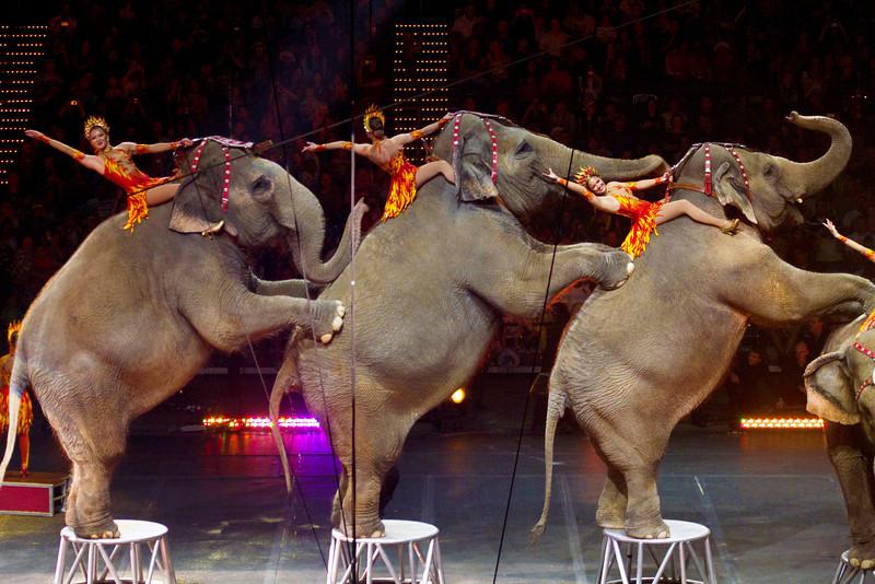 elephantsonhindlegswithriders3.jpg