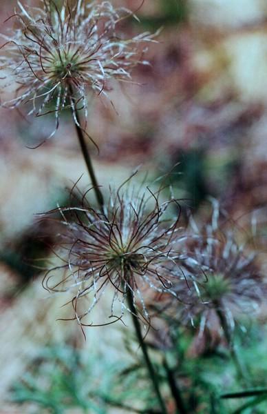 amh FLOWERS (1138).jpg