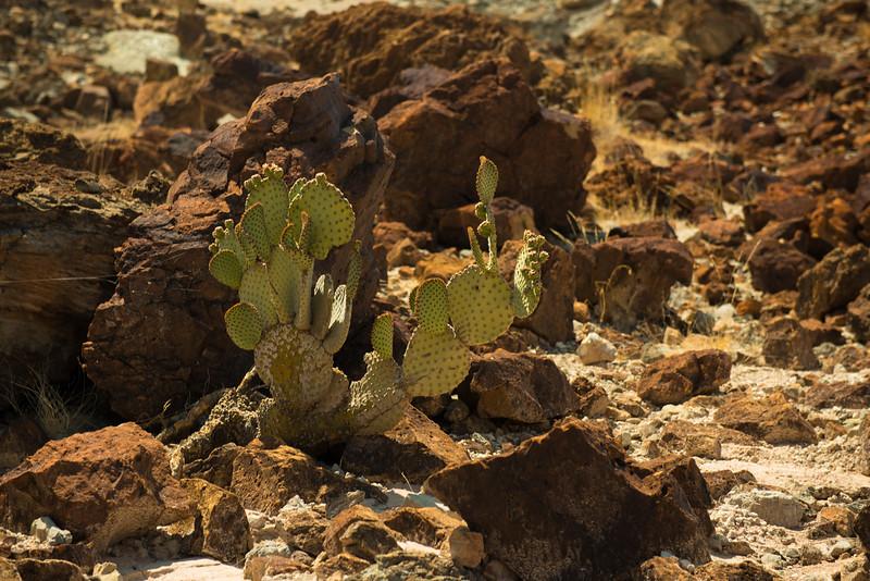 CactusinTuffCanyon.jpg