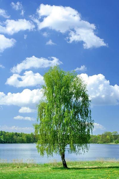 tree 09 .jpg