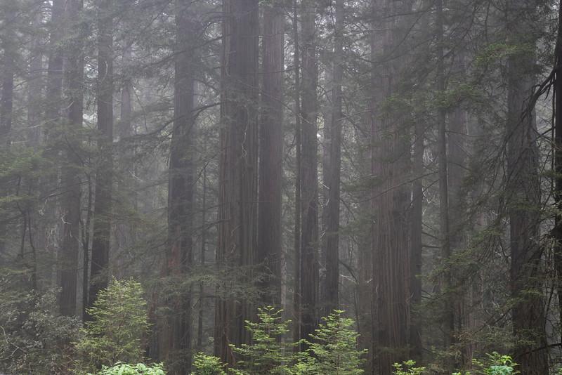 redwoodsFin29-1227.jpg