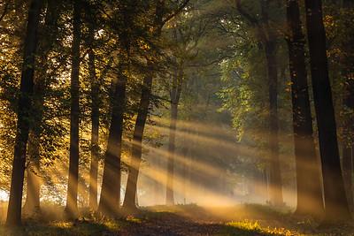 Timelapse - Zonnestralen in het bos