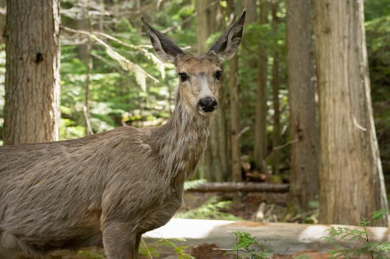 Bambi    John's Lake