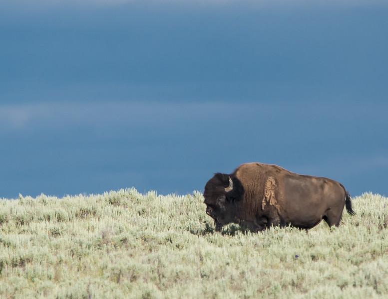 Yellowstone-14.jpg