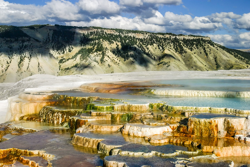 Mammoth Hot Springs Terraces and forest - Mammoth, Yellowstone National Park, Wyoming, United States (US)