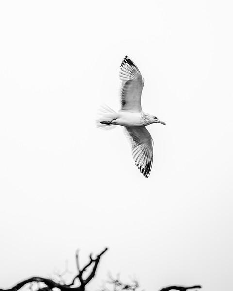 seagul-4.jpg