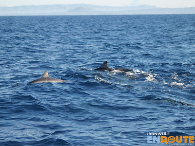 Pamilacan Dolphins