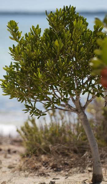 Little tree on the beach