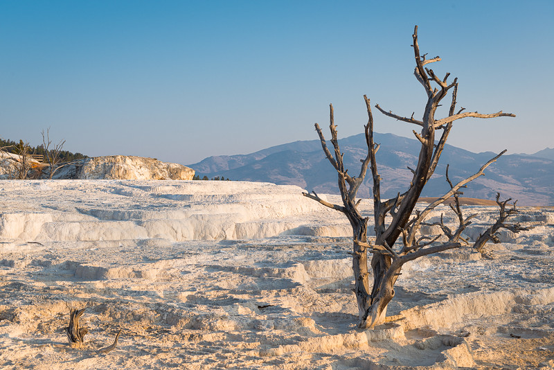 Terraces, Mammoth Hot Springs, Yellowstone National Park