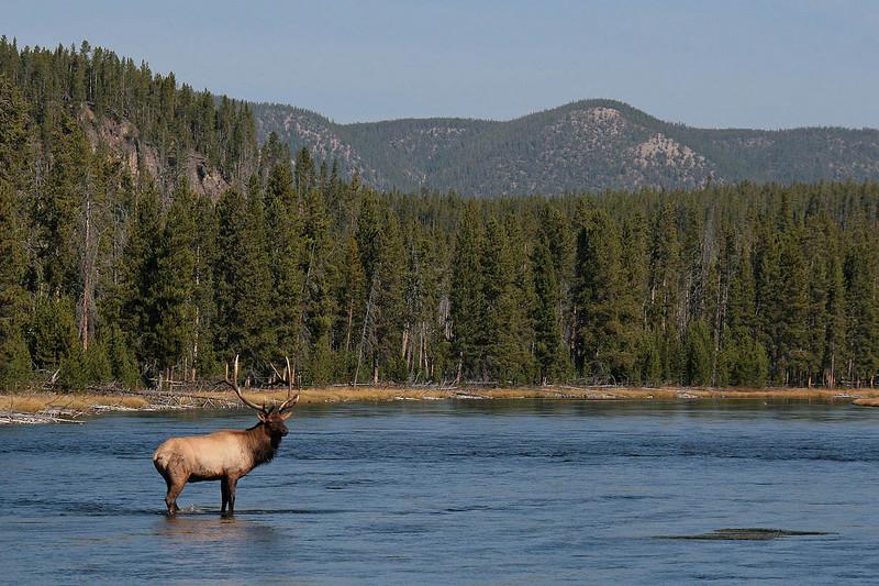 IMG_8358 elk water wide.jpg