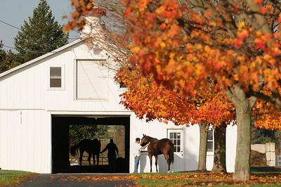 Sagamore Farm Fall 2010