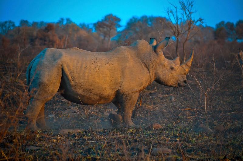White Rhino burned area.jpg