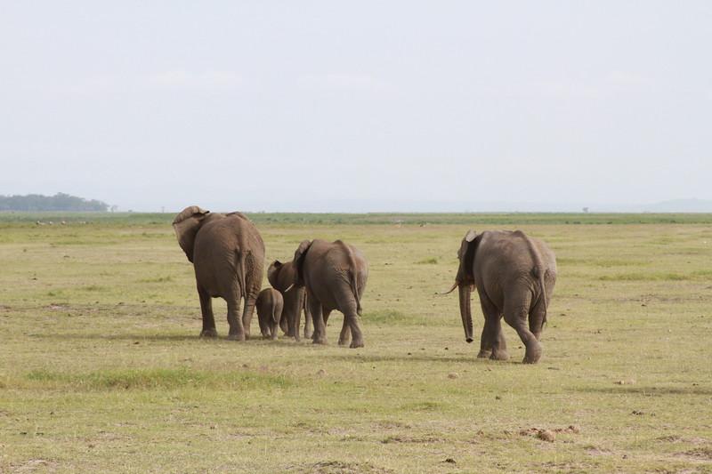 Kenya 2019 #2 768.JPG
