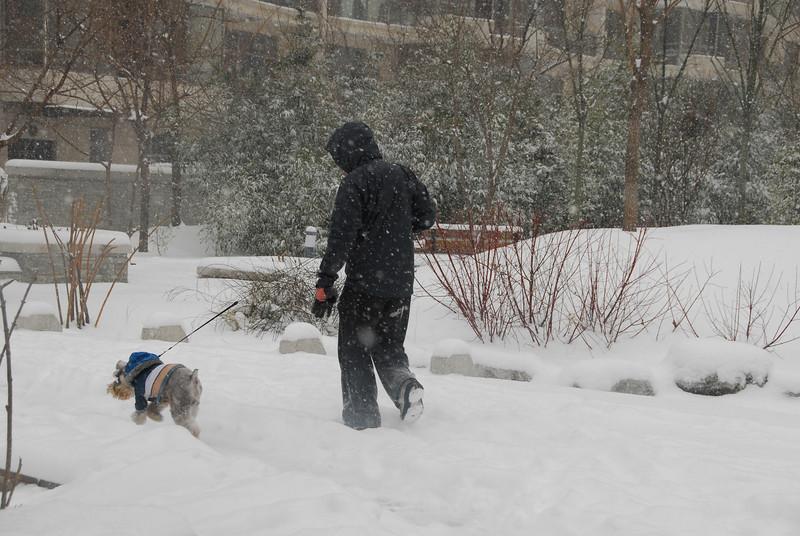[20100103] 1st 2010 Snow in Beijing (88).JPG