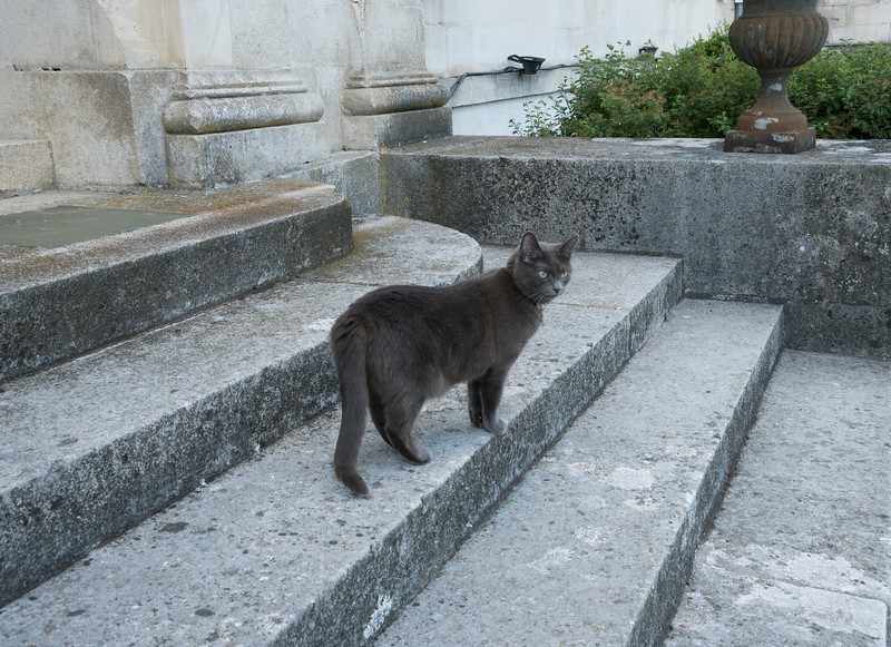 Chateau Cat