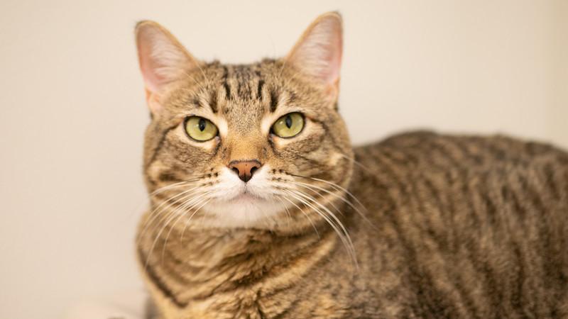 Kitty Toledo
