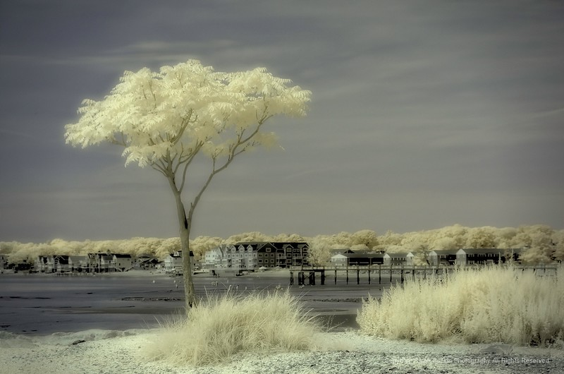 Shutterbugs Silver Sands State Park, Milford, CT in infrared