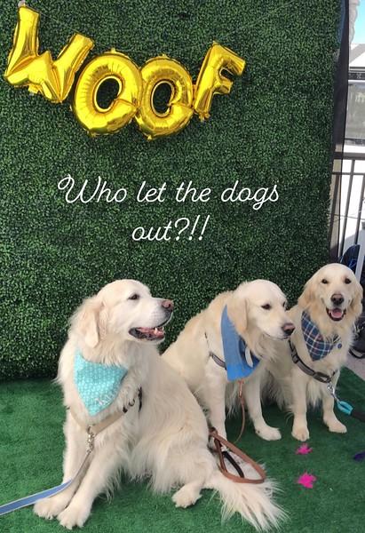 Doggies on deck-3.jpg