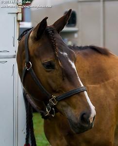 7-16-2011 Open Show Mila Equestrian Center
