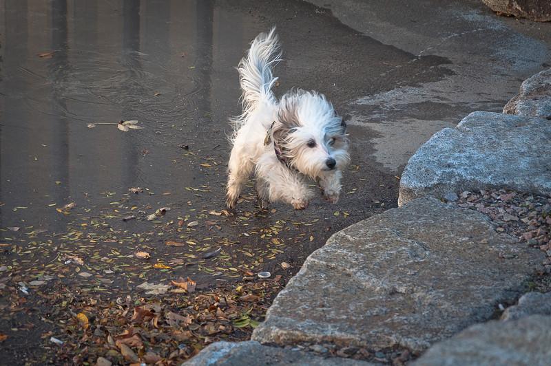 dog run32.jpg
