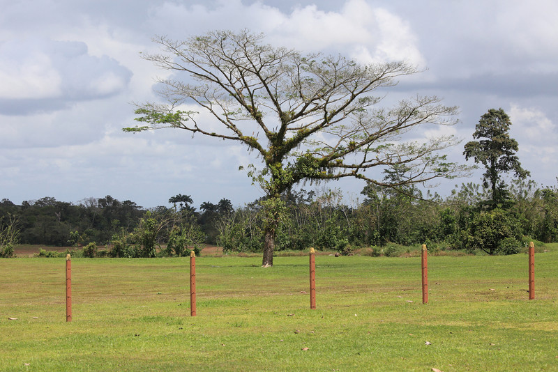 costa_rica_tree_in_field.JPG