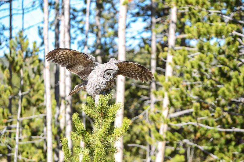 Fall Trip Wyoming & Montana 2016 (112 of 193).jpg
