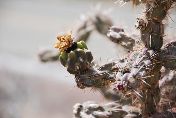 0622 cactus.JPG