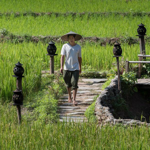 Man walking in rice field, Kamu Lodge, Ban Gnoyhai, Luang Prabang, Laos