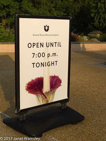 2017 Botanical Gardens - Corpse Flower