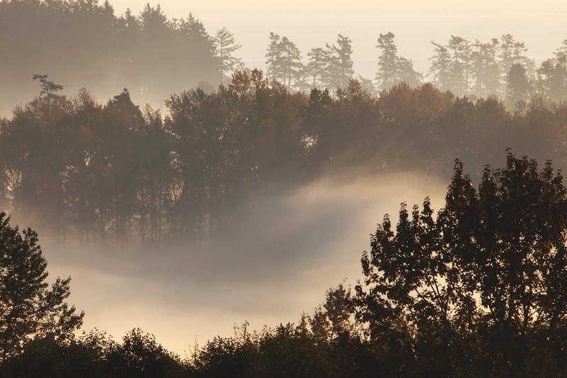 The Elegance of Fog