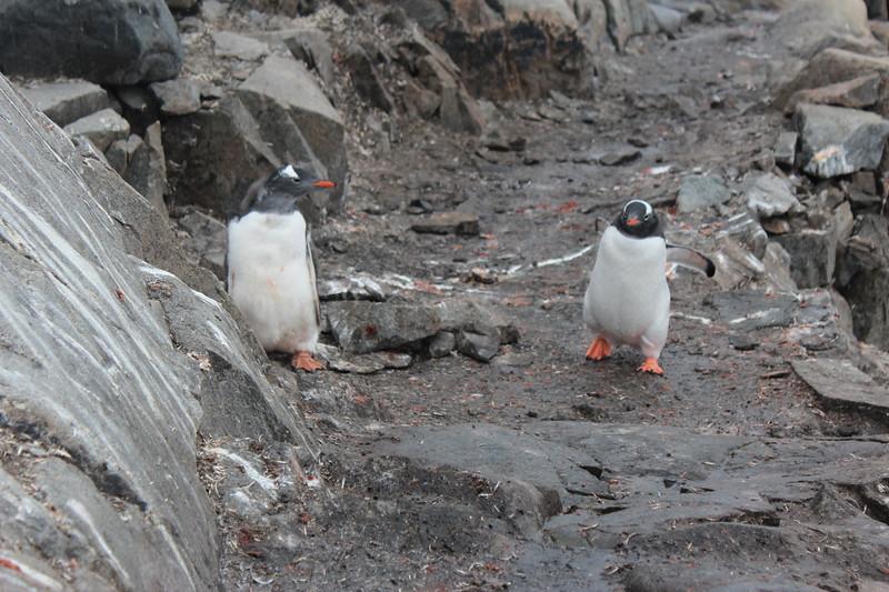 Antarctica 294.JPG