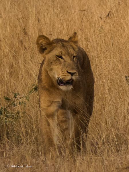 Lions Queen Elizabeth - K-1.jpg