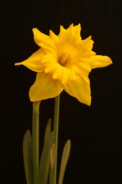 Yel Flower08.jpg