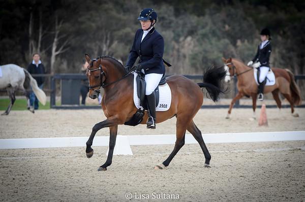 Saturday's Dancing Horse