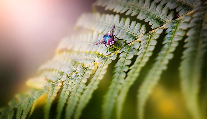 Bugs and Beetles - 21.jpg