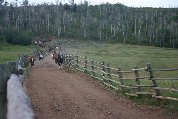 Horses and Barn Dance