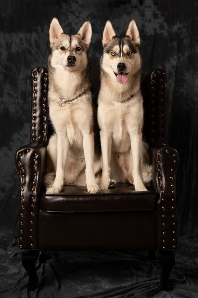 Loki and Scout-945A8811.jpg