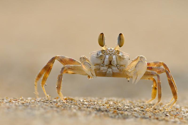 Crabby-portrait.jpg