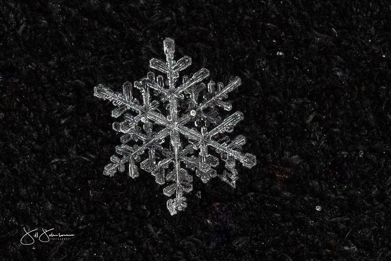 snowflakes-1229.jpg