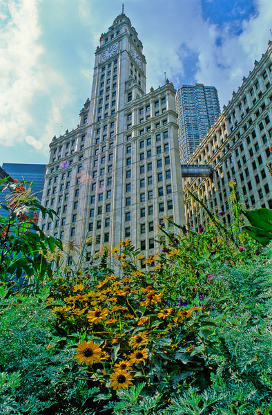 The Wrigley Building, Michigan Avenue