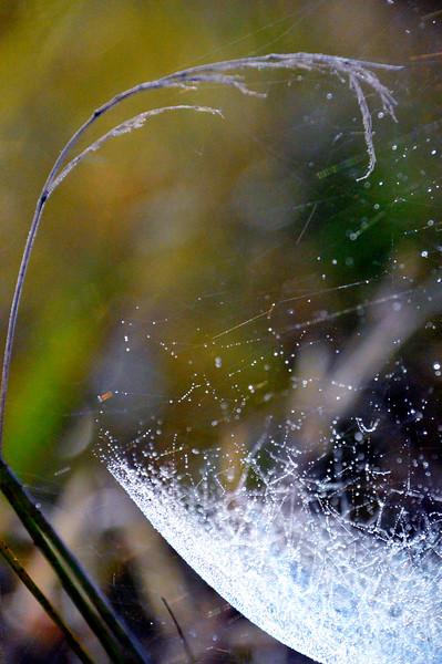 Spiderweb-closeup-Aug2015.jpg