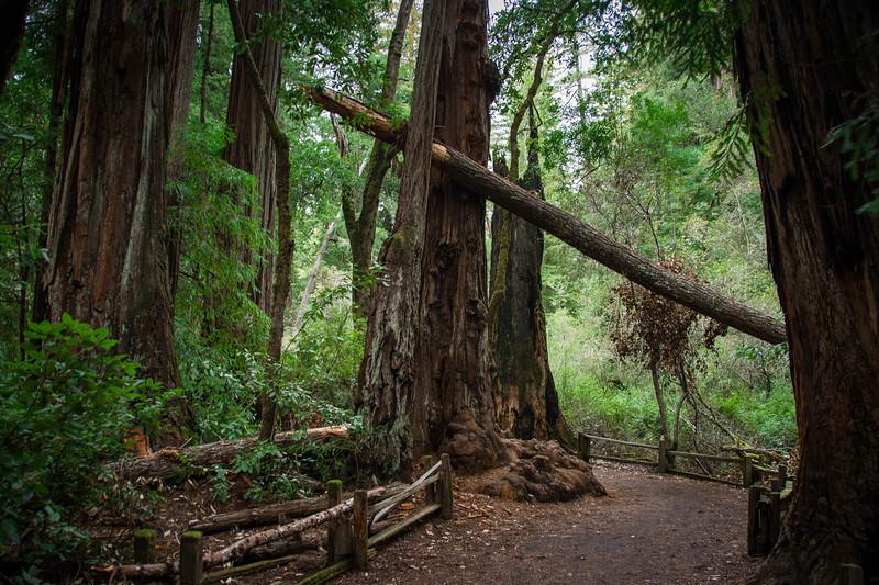 Redwood-35.jpg