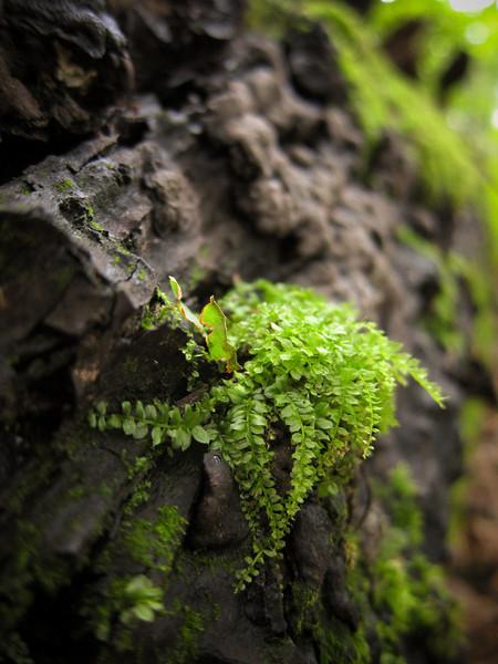Teeny tiny fern.