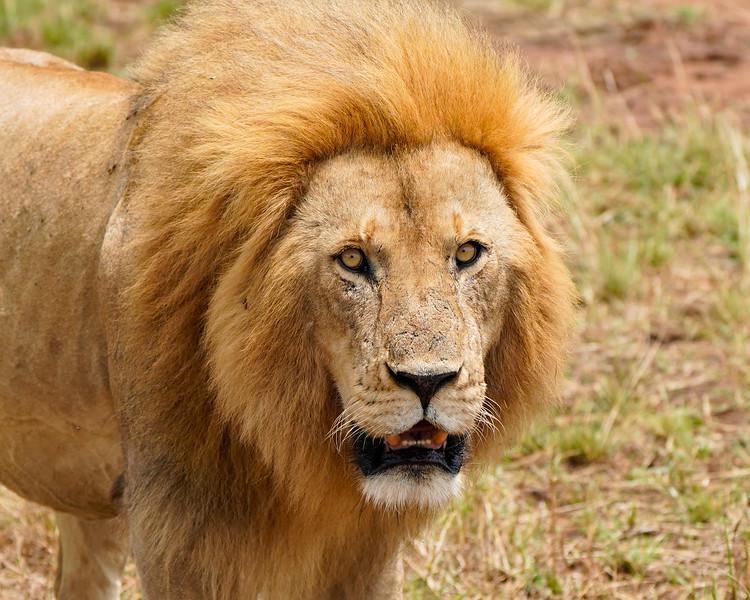 safari-2018-134.jpg